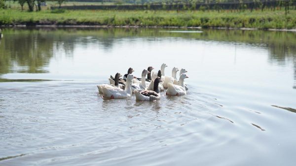 Laguna de los gansos. BordeRío